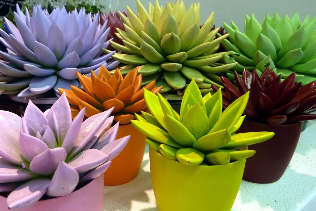 Makkelijke vetplanten